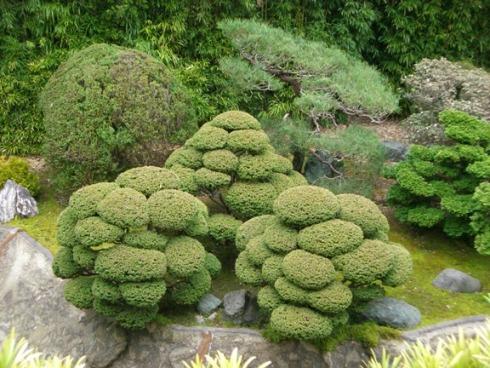 Чайный садик японский чайный сад